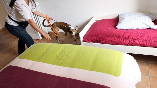 les haricots aident d barrasser les literies des punaises rtbf societe. Black Bedroom Furniture Sets. Home Design Ideas